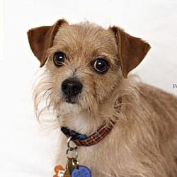 Pin By Chris Gallagher On Adoptable Pets Utah Pets Terrier