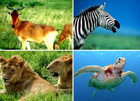 Achimota Eco Park Project   Wild Animals of Ghana   Animals