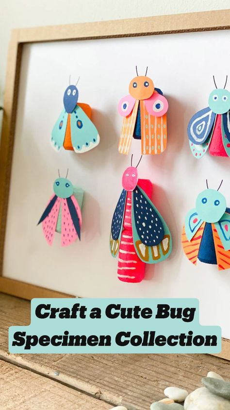 Best Cute Bug Specimen Collection Craft
