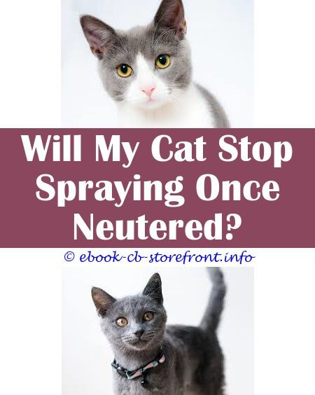 11 Tantalizing How Stop Cat Spraying In House Toxoplasmosis Bebe Admirable