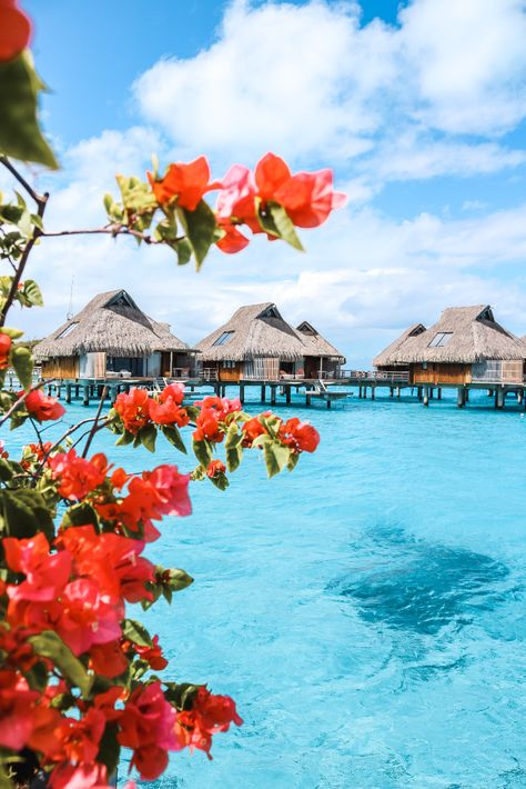 Top Travel Destinations, Holiday Destinations, Places To Travel, Places To Go, Travel Tips, Bora Bora French Polynesia, Tahiti, Vacation Places, Dream Vacations