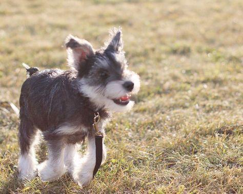 dogsofinstagram Run! Run towards your...