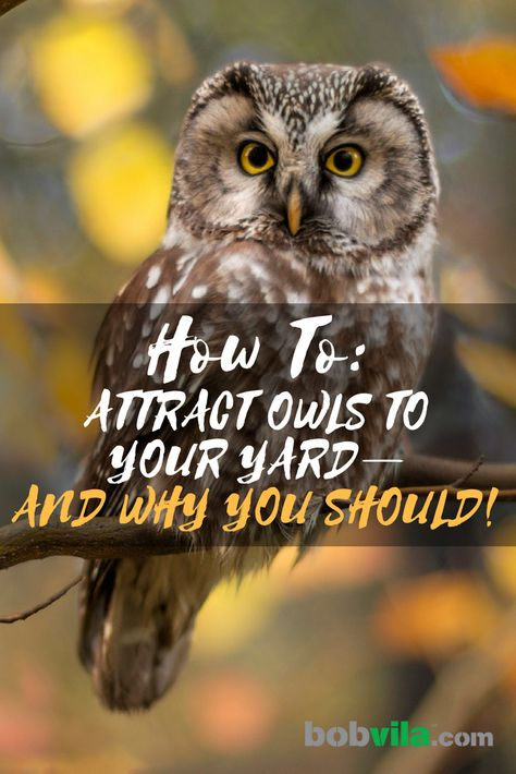 How to Attract Owls to Your Yard and Solve Your Pest Problem | Bob Vila