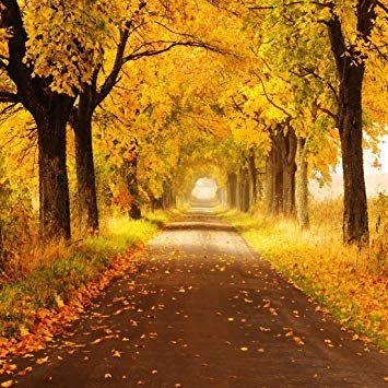 Amazon.com: AIIKES Autumn Scenery 10X10ft Vinyl Photography