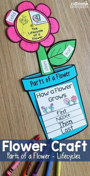 Flower 3 In 1 Craft Parts Of A Flower Flower Life Cycle Parts Of A Flower Plants Kindergarten Flower Life Cycle