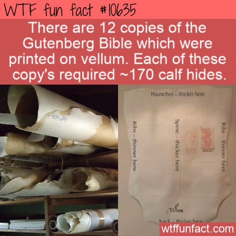 WTF Facts : funny, interesting & weird facts  WTF Fun Fact - Vellum Bibles  #wtf #funfact #wtffunfact 10635 #calfhide #funnyfacts #GutenbergBible #randomfact #randomfacts #randomfunnyfact #vellum #Weird #wtffunfact