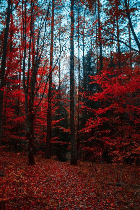 38 Magical Forest Photographs