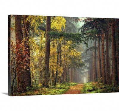 Great Big Canvas Colors Of The Forest Lars Van De Goor Photographic Print Wayfair Skinwithbrownspo In 2020 Canvas Art Wall Decor Canvas Wall Art Nautical Painting