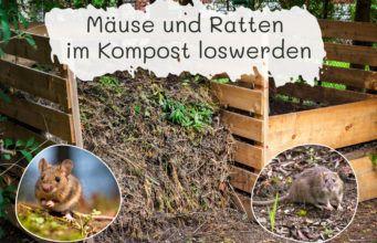 Mause Und Ratten Im Kompost Loswerden Gartendialog De Kompost Ratten Loswerden Ratten