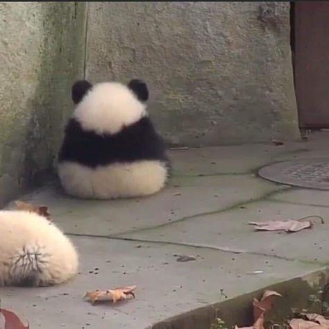 Kung Fu Panda Legends of awesomenesssass Cute Animal Memes, Cute Memes, Cute Funny Animals, Funny Cute, Hilarious, Animal Pictures, Funny Pictures, Cute Little Animals, Cute Panda