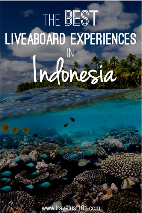 scuba diving | Indonesia travel | liveaboard | diving | Have You Ever Wanted to Go Scuba Diving in Indonesia? In this post, read reviews of the best diving destinations and liveaboard experiences in Indonesia #scuba #divingtrip #scubadiving #indonesia #indonesiadiving #liveaboard