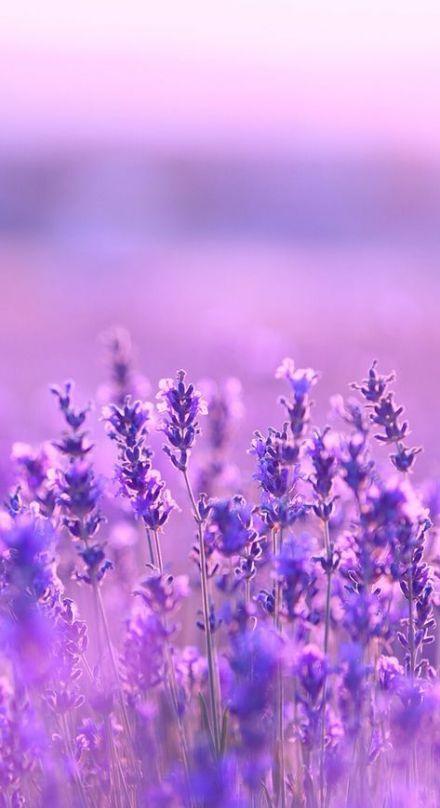 Best Flowers Meanings Lavender 23+ Ideas #flowers