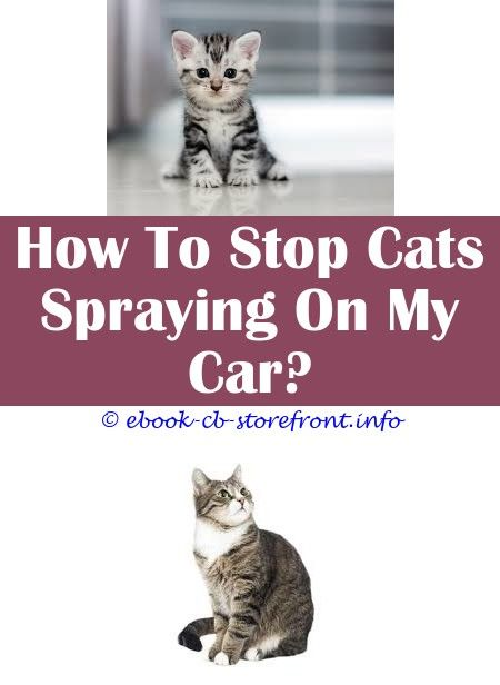 3 Fabulous Cool Ideas At What Age Do Boy Cats Start Spraying Cat Heat Spray Bitter Spray For Cats Walmart Anti Bite Spray For Cats Permethrin Clothing Sensible