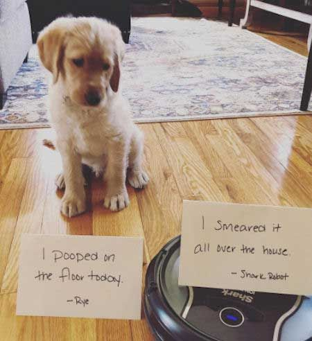 Insane Dog Shaming Pictures That Will Make You Smile Dog