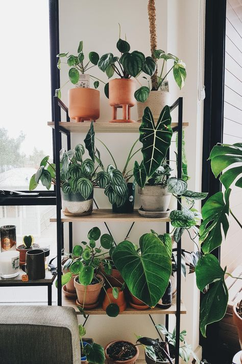 Never too much green! # green # much Indoor Garden, Garden Plants, Indoor Plants, Easy House Plants, Plant Aesthetic, Room With Plants, Plants Are Friends, Colorful Plants, Green Life