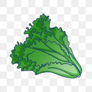 Green Vegetables Lettuce Green Lettuce Lettuce Illustration Green Vegetables Png Transparent Clipart Image And Psd File For Free Download In 2020 Vegetable Illustration Vegetable Drawing Vegetable Cartoon