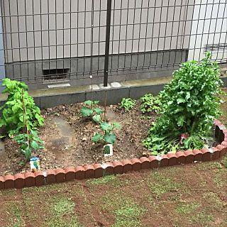 庭 家庭菜園のインテリア実例 2018 05 13 17 24 35 Roomclip