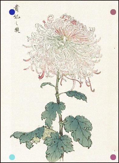 Keika Hasegawa Chrysanthemum 1893 Wood Block Print Flower Art Japanese Art Oriental Art