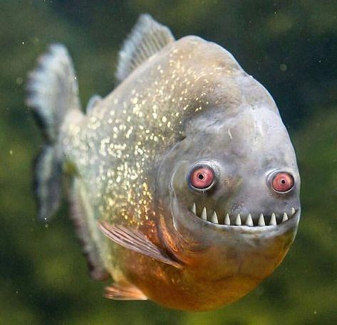 Snow в Твиттере: «Эта рыба настолько всрато-прекрасна, что я не могу.… »