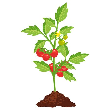 Tomato Bush Icon With Small Red Vegetables Garden Plant Health In 2021 Red Vegetables Garden Plants Plants