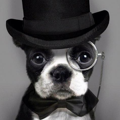 A True Gentleman for Ramona -- Su futuro yerno @oscbot