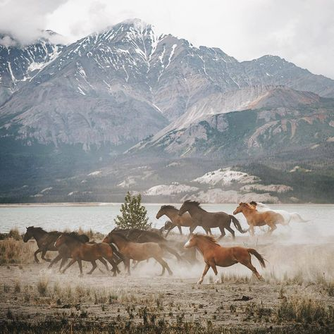 """A bunch of wild horses living on a remote beach. Unreal sights witnessed in the Yukon Territory.…"" by Johannes Höhn Pretty Horses, Horse Love, Beautiful Horses, Animals Beautiful, Scenery Photography, Tumblr Photography, Equine Photography, Landscape Photography, Cool Pictures Of Nature"