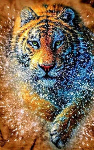 خلفيات حيوانات خلفيات للاندرويد خلفيات للايفون خلفيات للهاتف خلفيات نمر صور صور خلفيات نمر Tiger Wallpape Tiger Photography Tiger Pictures Big Cats Art