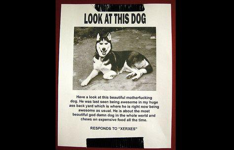 Badass Dog Flyer Funny Pinterest Dog - lost dog flyer template word