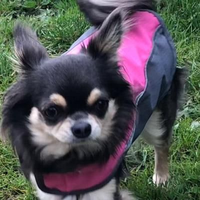 Puppies For Sale Craigslist Houston