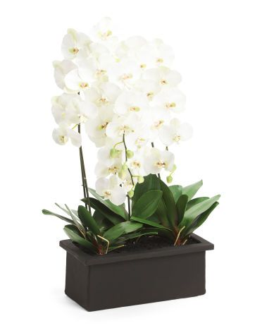 37in Real Touch Orchid In Ceramic Pot Black White Shop T J