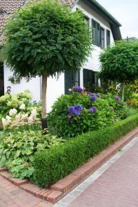 Hortensie Annabelle im Vorgarten | Garten | Pinterest | Hortensie ...