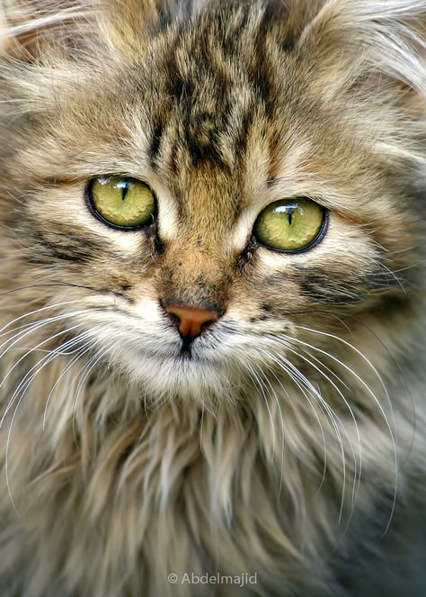 """Since each of us is only blessed with one life, why not live it with a cat? --Robert Stearns"