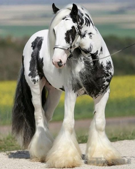 15 Amazing Images Of Draft Horses That You'll Love
