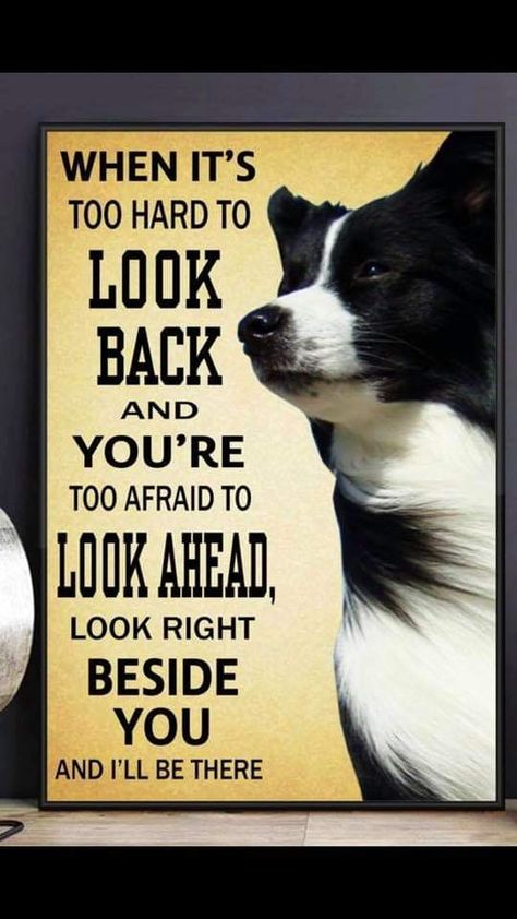 Walk Beside Me Dogs Cats Friendship Faithful Dog Quotes