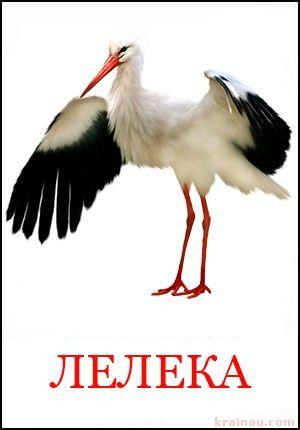 Картинки птахів для дітей дошкільного віку | Для дітей, Тварини