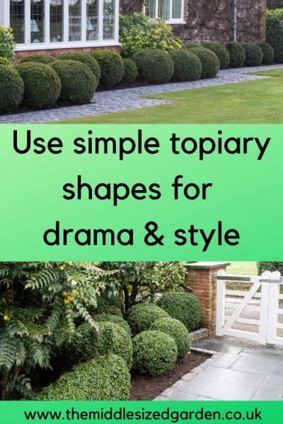 How To Use Easy Topiary Shapes In Stylish Ways The Middle Sized Garden Topiary Winter Garden Building Raised Garden Beds