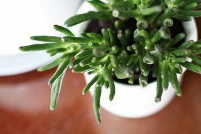 Kwiaty Doniczkowe W Naszym Domu Wybralam Te Naprawde Latwe W Uprawie House Plants Plants Herbs