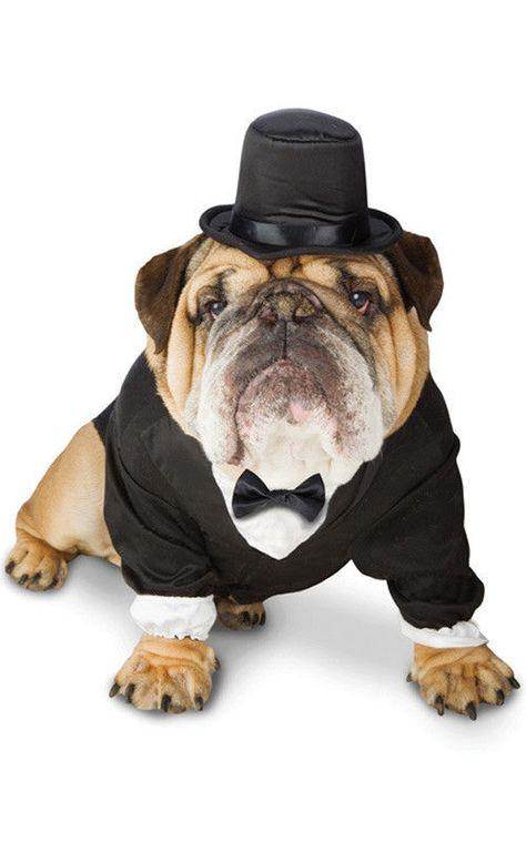Details About Tuxedo Suit Dog Pet Costume Wedding Fancy Dress