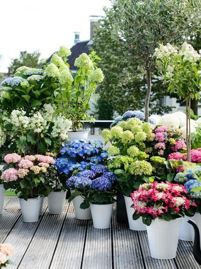 Rosliny Na Balkon Wschodni Wybieramy Kwiaty Balkonowe Urzadzamy Pl Garden Plants Home And Garden