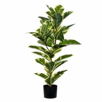 Large Leaf Fig Tall Floor Ficus Tree In Pot In 2020 Potted Trees Ficus Tree Floor Plants