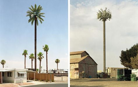 Cellphone towers disguised like trees