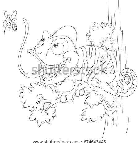 Coloring Page Of Chameleon And Mosquito Colouring Book For Kids
