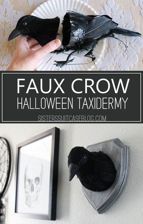 Make this easy DIY Faux Crow taxidermy for a Halloween Gallery Wall or spooky party decor! Just a few dollars in supplies from the craft store! DIY Halloween Halloween Gallery Wall - My Sister's Suitcase Halloween Tags, Halloween Prop, Halloween Mignon, Casa Halloween, Theme Halloween, Halloween 2020, Holidays Halloween, Halloween Crafts, Happy Halloween