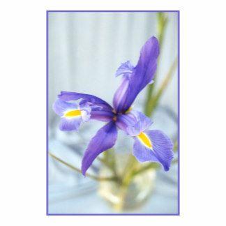 Awaken Purple Iris Flower Photo Iris Flower Photos Purple Iris Flowers Iris Flowers