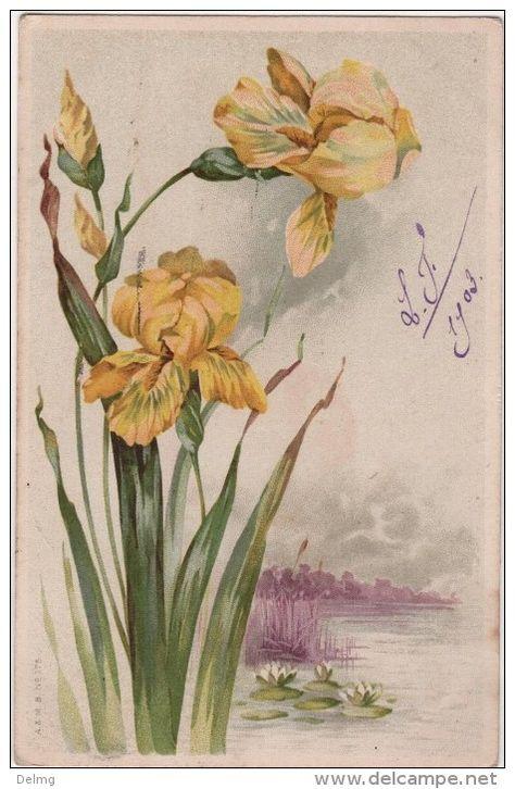 Catharina Klein Art Floral Aquarelle Et Encre Peintures Florales