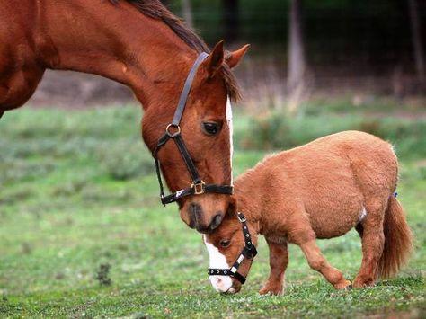 Anne Ile Yavru At At Eşek Katır Horses Animals Ve Big Horses