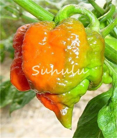 100pcs Mini Cherry Chili Seedsplants Carolina Reaper Organic