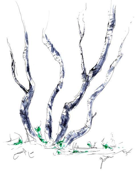 White Birch Group