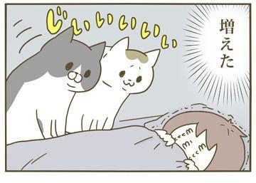 いつから見つめていたのか 犬 猫 漫画 猫 漫画 猫