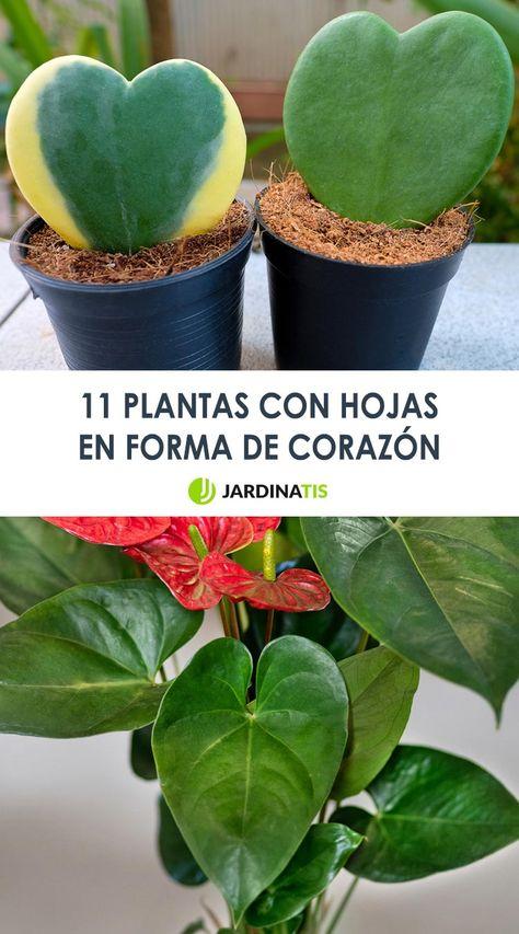 110 Ideas De Fichas De Plantas En 2021 Plantas Herramientas De Jardineria Jardinería
